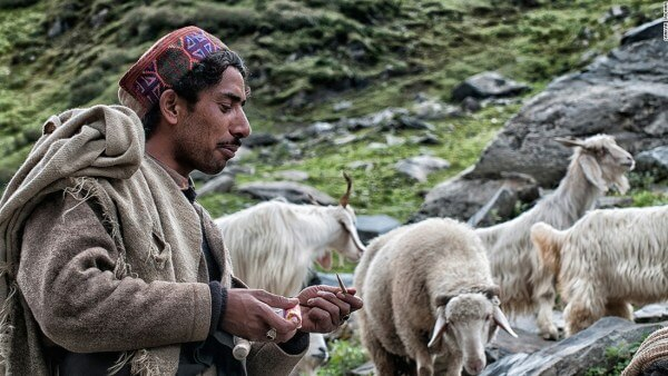 Shepherd Smoking Bidi